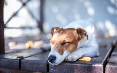 Make Your Deck Safe for Children & Pets